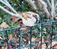 Ptak w centrala parku obrazy royalty free