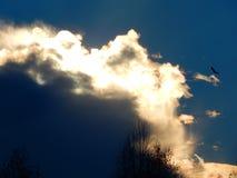 Ptak w chmurnym niebie Obrazy Royalty Free