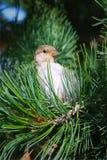 Ptak w drzewie Obrazy Royalty Free