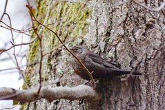 Ptak w drzewie Zdjęcie Stock