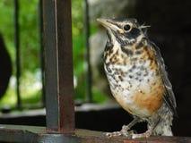 Ptak w górę i ogłoszenie towarzyskie obrazy royalty free