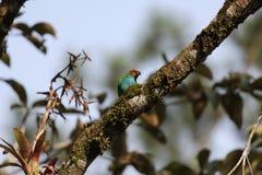 Ptak w gałąź Fotografia Royalty Free