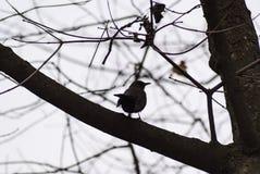 Ptak w gałąź Obrazy Royalty Free
