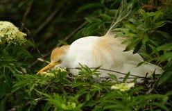 Ptak w gniazdeczku Zdjęcie Stock