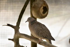 Ptak w klatce Obrazy Stock