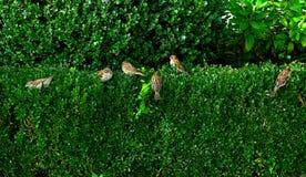 Ptak w krzaku Zdjęcia Royalty Free