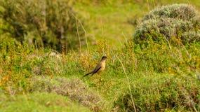 Ptak w krzaku z cierniami zdjęcie royalty free