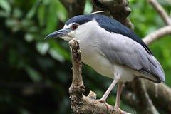 Ptak w Kuala Lumpur ptaka parku fotografia royalty free