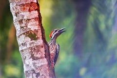 Ptak w lata popołudniu Obrazy Royalty Free