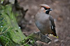 Ptak w lesie obraz stock