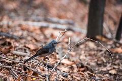 Ptak w lesie obrazy royalty free