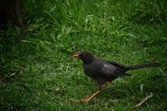 Ptak w Lesie zdjęcia royalty free