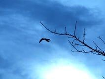 Ptak w locie Zdjęcia Stock