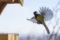 Ptak w locie Obrazy Stock