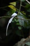 Ptak w naturze Fotografia Stock