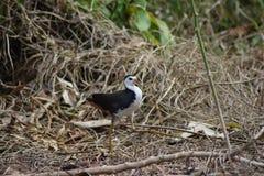 Ptak w ogródzie obraz royalty free