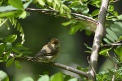 Ptak w parku Zdjęcie Royalty Free