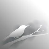 ptak w popielatym tle z cieniem Fotografia Royalty Free