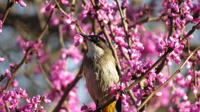 Ptak wśród kwiatów Zdjęcie Royalty Free