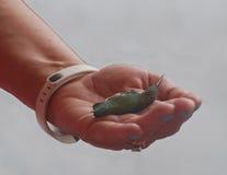 Ptak w ręce obrazy stock