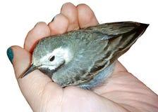 Ptak w ręce fotografia stock
