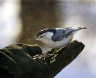 Ptak w ręce Zdjęcia Stock
