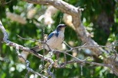 Ptak w sekwoja parku narodowym Fotografia Stock