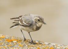 Ptak w wałkowym drzewie Zdjęcie Stock