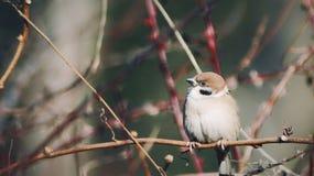 Ptak w zimie Obrazy Royalty Free
