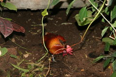 Ptak w zoo Zdjęcia Stock