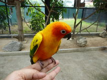 Ptak w zoo Fotografia Stock