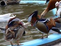 ptak wody Zdjęcia Royalty Free