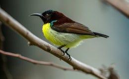 Ptak z żółtymi piórkami zdjęcia stock