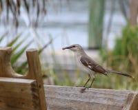 Ptak z dżdżownicą Zdjęcie Royalty Free