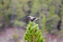 Ptak z dużym belfrem Obrazy Royalty Free