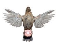 Ptak z jajkiem Obraz Stock