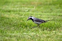 Ptak z osą w belfrze Obrazy Royalty Free