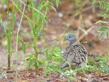 ptak z powrotem Fotografia Royalty Free