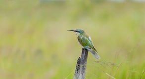 Ptak zamknięty up zwierzęcy południowy Africa Fotografia Stock