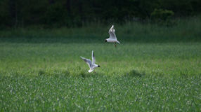 Ptaka above pole obraz stock