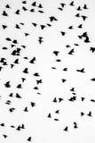 Ptaka bw obrazy stock