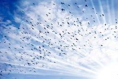 ptaka covey Zdjęcie Royalty Free