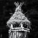 Ptaka domowy obwieszenie na drzewnym fiszorku, bezbarwnym obrazy royalty free