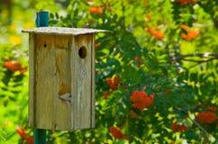 ptaka drewniany domowy Zdjęcia Stock