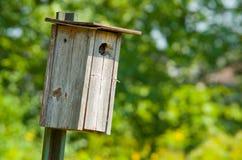 ptaka drewniany domowy Obraz Royalty Free