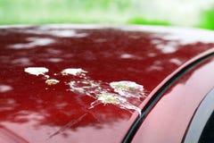 Ptaka gówno, kropla ptasia plama na czerwonej samochód powierzchni, brudny odpady ptaki opuszcza splatter, brudzi plama ptaka sra fotografia stock