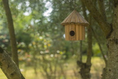 Ptaka gniazdeczka dom Fotografia Royalty Free