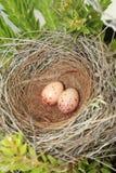 ptaka gniazdeczko Fotografia Royalty Free