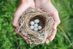 ptaka gniazdeczko Fotografia Stock