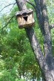Ptaka gniazdeczko Zdjęcia Stock